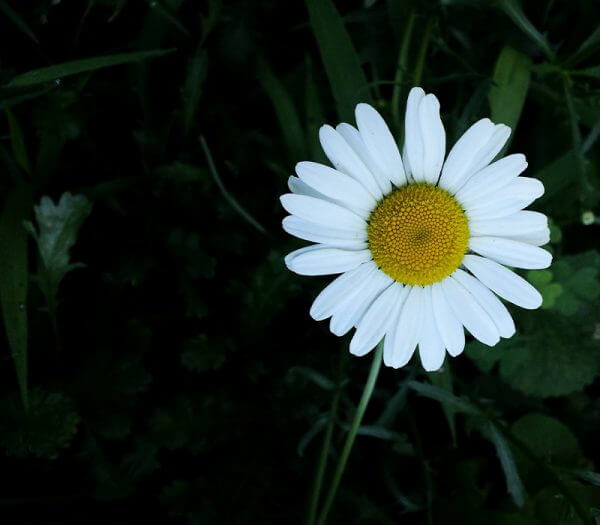 Digital Photography for Everyone Flower